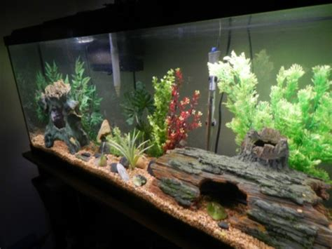 New Bathroom Ideas 2014 Cool Fish Tanks Aquariums Memes