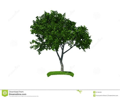 where to put a tree in a small room 3d render of the small tree stock illustration image