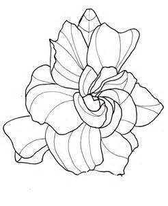 Gardenia Flower Drawing Line Drawing Flowers Gardenia Drawings