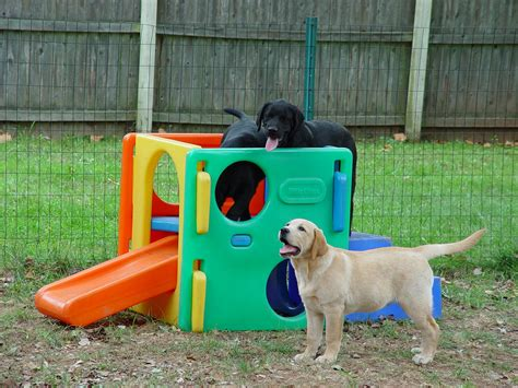 dog backyard play equipment folklaur dog areas