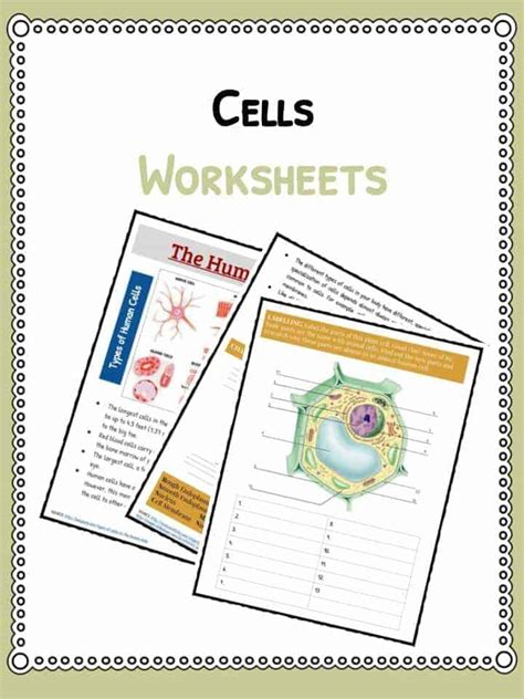 Cells Worksheets by Science Worksheets And Activities For Kidskonnect