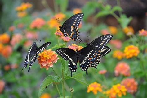 gardening for butterflies planting with butterfly friendly plants for your garden