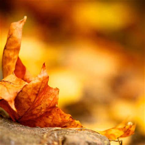 wallpaper pohon coklat gambar gambar daun yang alami dan sangat indah wallpaper