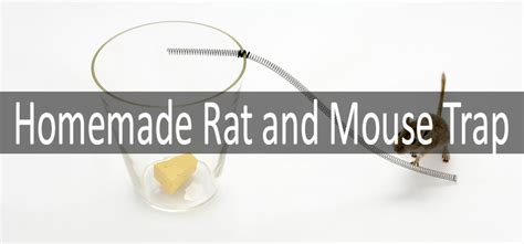 make rat bait for traps ftempo