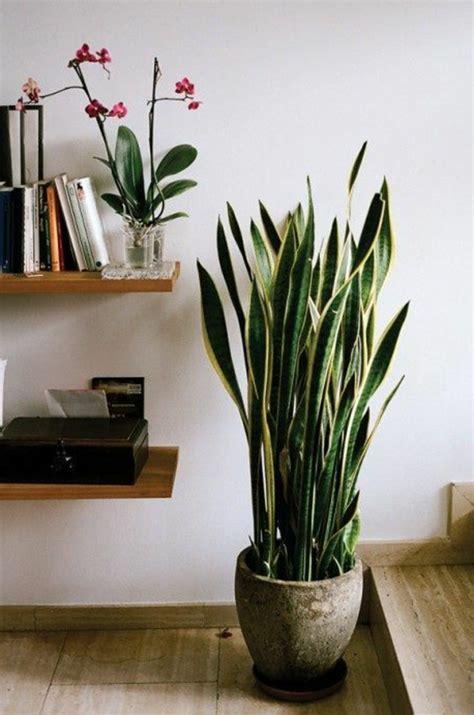 Plante Verte D Interieur