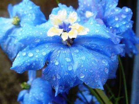 Summer Flower Blue Flowers Blue Flower