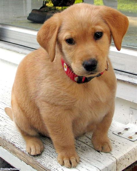 puppy news puppy pictures freaking news