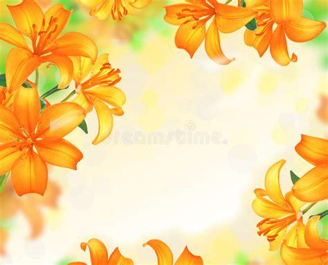 border design flower yellow lily flowers border design stock photo image of beauty