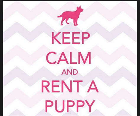 rent a puppy where can i rent a puppy or kitten here s 5 legit companies you can rent a pet from
