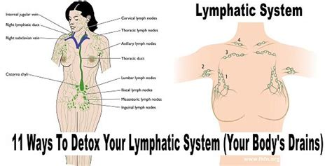 What Is A Lymp Node Detox Machine by 433 Best Images About Lymphedema On Lymph