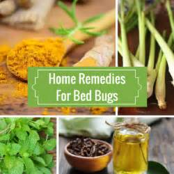 getting rid of bed bugs home remedies natural hero natural living for your health