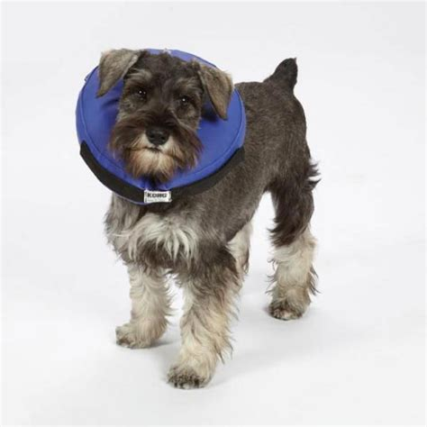 elizabethan collar for dogs cloud pet collar a soft alternative to elizabethan collars ebay