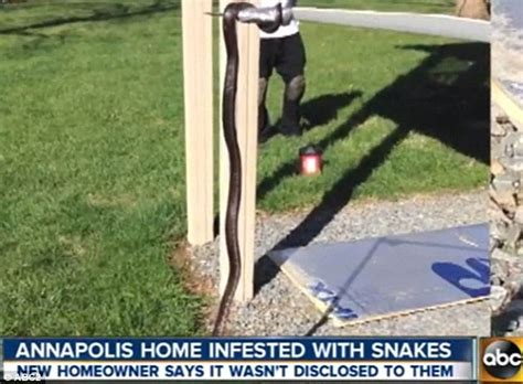 house infested with snakes dream house was infested with snakes photo ecanadanow