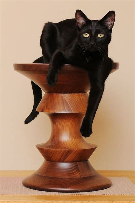 Cat Black Stool by Olive On His Eames Walnut Stool Cats