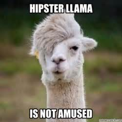 Llama Memes - hipster llama