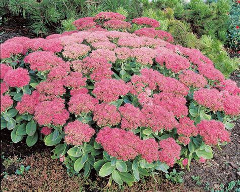 plantes pour jardin de rocaille tendances d 233 co d 233 co