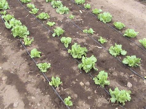 come fare irrigazione giardino impianto irrigazione giardino fai da te impianto