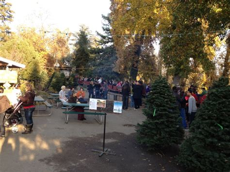 christmas trees hillcrest
