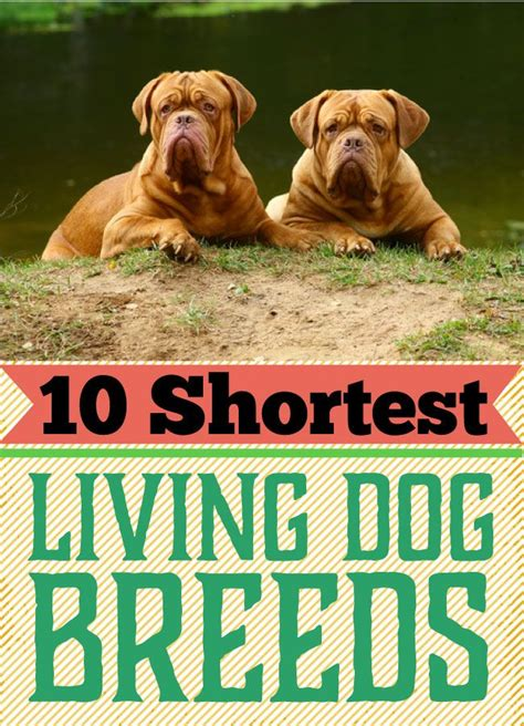 shortest living breed the 10 shortest living breeds friends