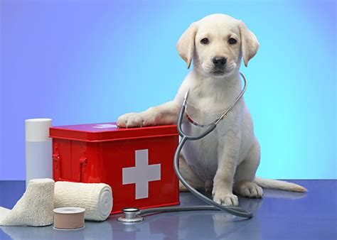 puppy doctor stethoscope animal stock photos kimballstock