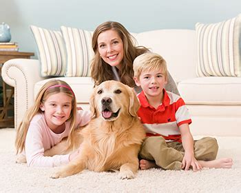 golden retriever odor golden retriever odor dogs our friends photo