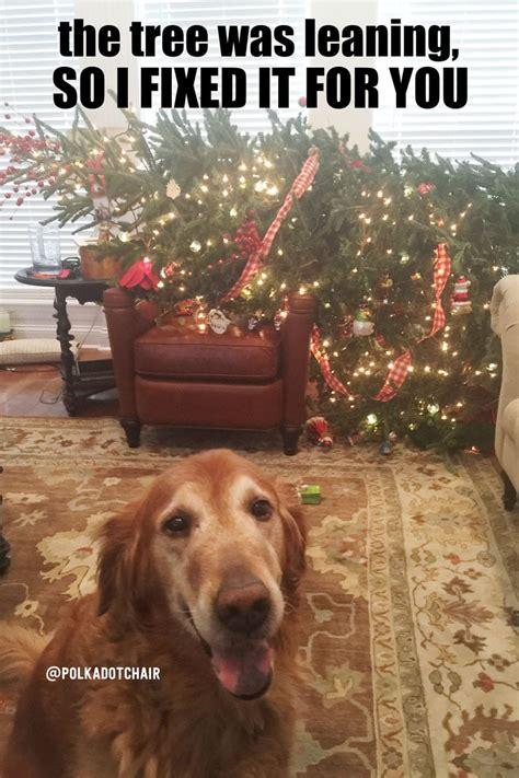 care   fresh christmas tree