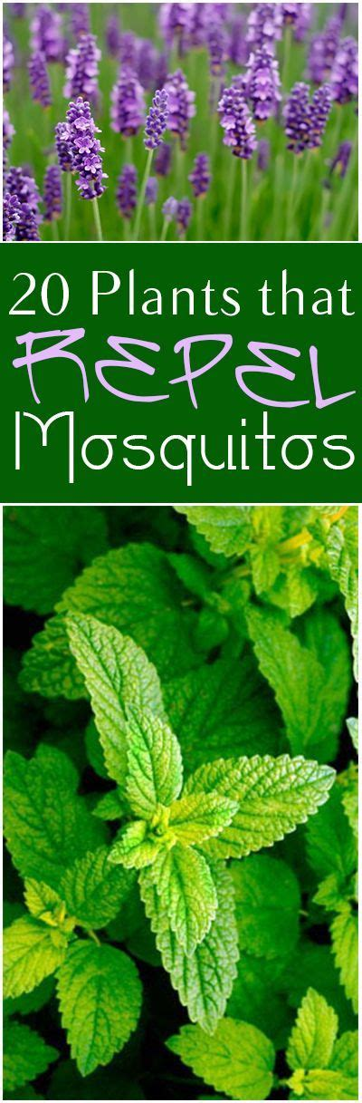repel mosquitos mosquitoes and plants on pinterest
