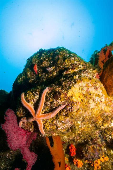 aventura en el mar 8427204132 191 te animas a una aventura submarina en el mar caribe descubre m 225 s aqu 237 http www bestday com