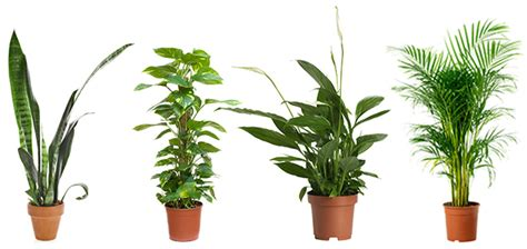 Bathroom Upgrade Ideas 4 powerful air purifying plants to clean the air in your home