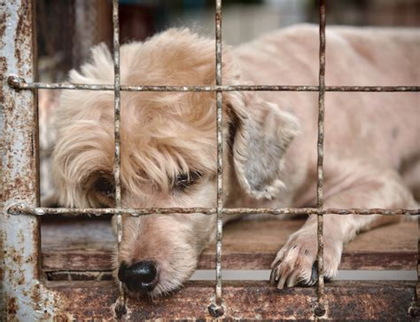 puppy mill definition puppy mills pet care facts