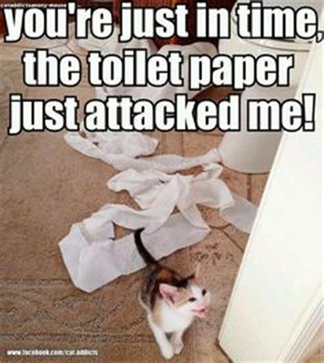 Newspaper Cat Meme - ethan ahlstrom on pinterest