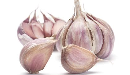 coltivare aglio in vaso orto sul balcone come coltivare l aglio in vaso leitv