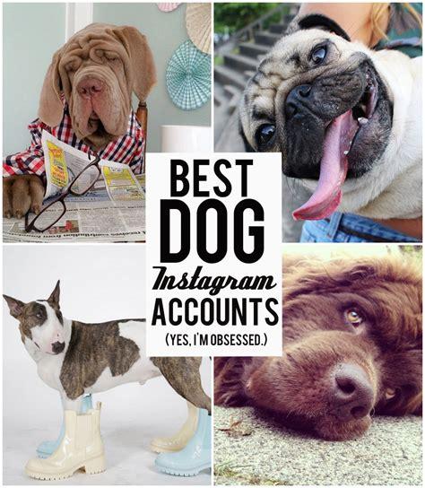instagram dog the best dog instagram accounts you should follow