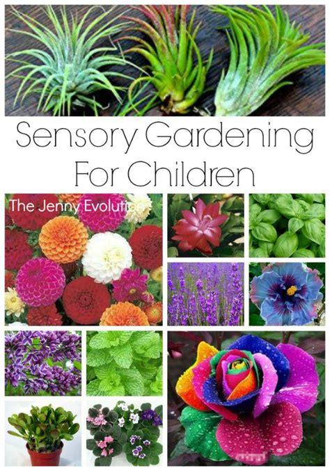 sensory garden ideas for children sensory garden garden