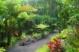 Hawaii Botanical Garden Scenic Drive To A Botanical Garden On Big Island Hawaii
