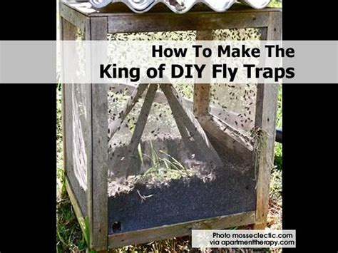 how to make a bed bug trap big h products hobo and brown recluse spider traps build a fly trap home