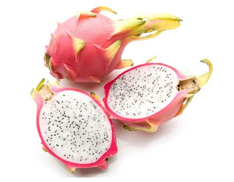 Jual Bibit Buah Naga Putih jual benih bibit buah naga putih ligno