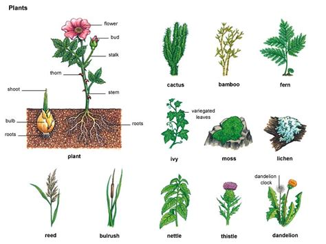 different types of gardening you gardening beginners tips for gardening