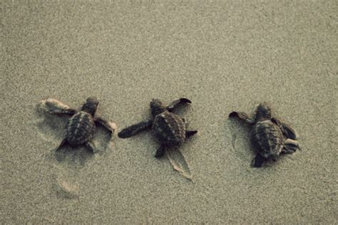 30 best pictures of turtles