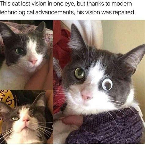 Dank Cat Memes - the future is now science miracle cure cat dank memes googly eye technology lol tragic