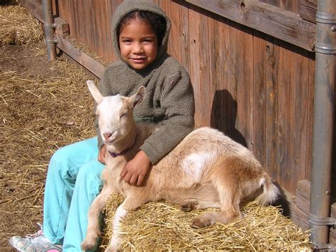 can i have goats in my backyard can i goats in backyard 28 images baby goats in the