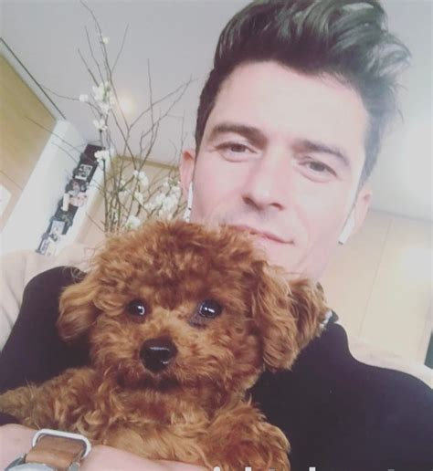 orlando bloom puppy video of orlando bloom playing with puppy is straight fire