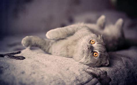 mobile wallpaper cat hd desktop wallpapers 4k hd cute cats hd wallpaper hd desktop wallpapers 4k hd