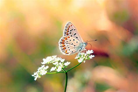 imagenes mariposas mas bonitas mundo banco de im 193 genes las mariposas m 225 s hermosas del mundo