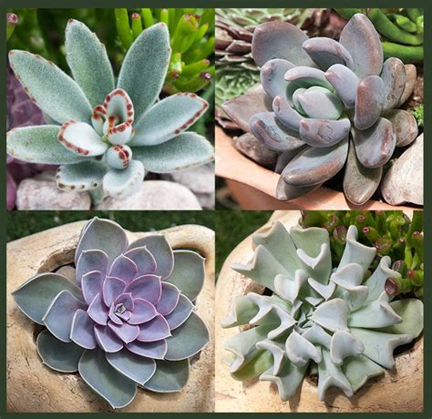 Indoorgardens Exotic Succulents Collection Buy Exotic Tender Cactus