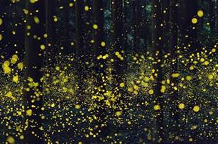 firefly colors surreal photos of fireflies from japan s 2016 summer