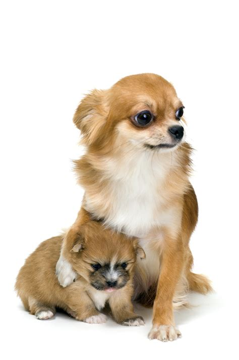 puppy insurance does pet insurance protect pregnancy in dogs cats
