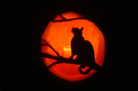 cat pumpkin it happened one search results