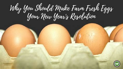 new year egg why you should make farm fresh eggs your new year s resolution