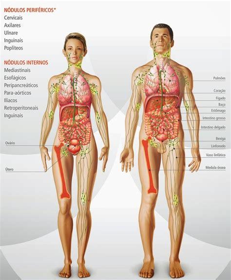 imagenes html no se ven im 225 genes de salud im 225 genes del sistema linf 225 tico